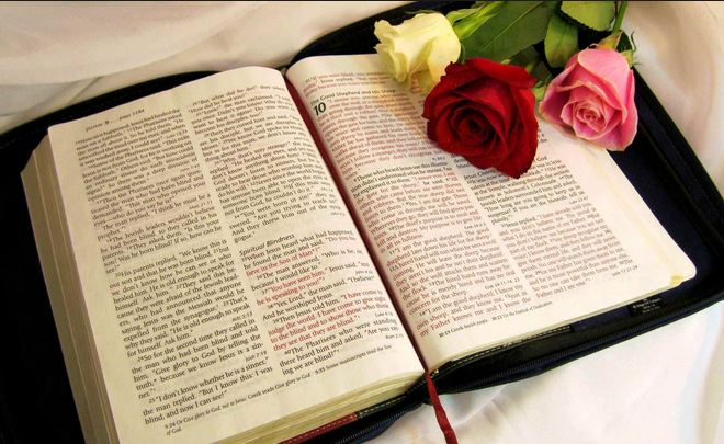 Bible roses